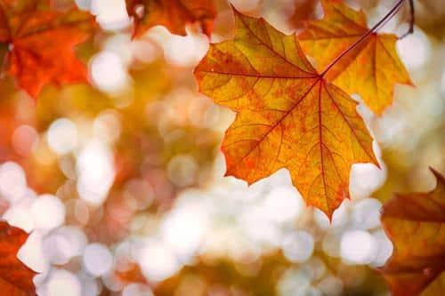 Autumn Leaves - đời người ngắn ngủi như lá thu