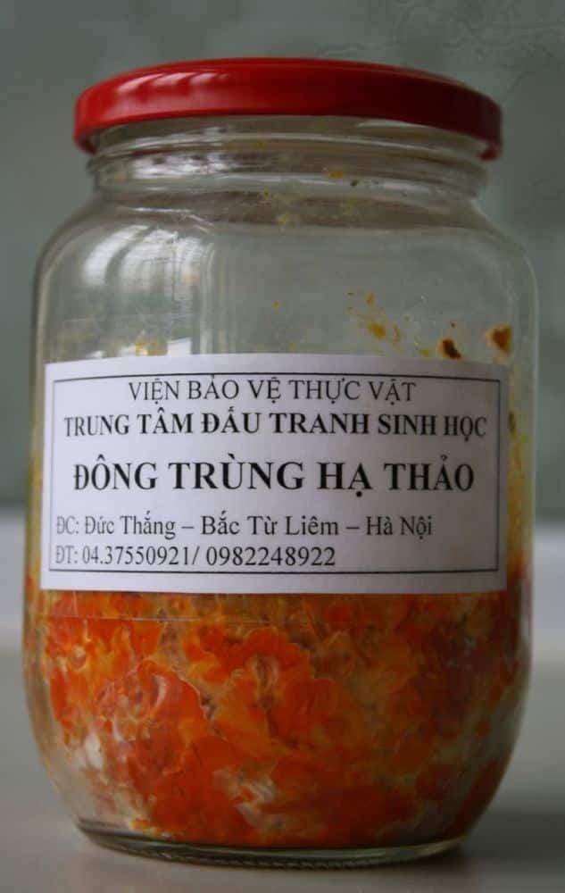 Đông trùng hạ thảo là gì? Top 10 nơi bán đông trùng hạ thảo uy tín tại Việt Nam