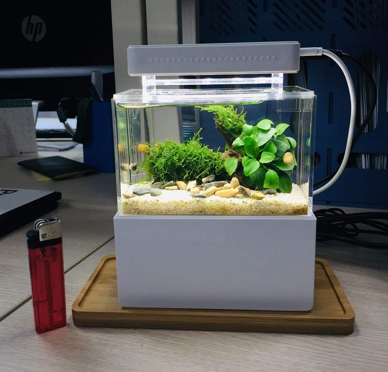 Bể cá mini để bàn Hà Nộiuy tín