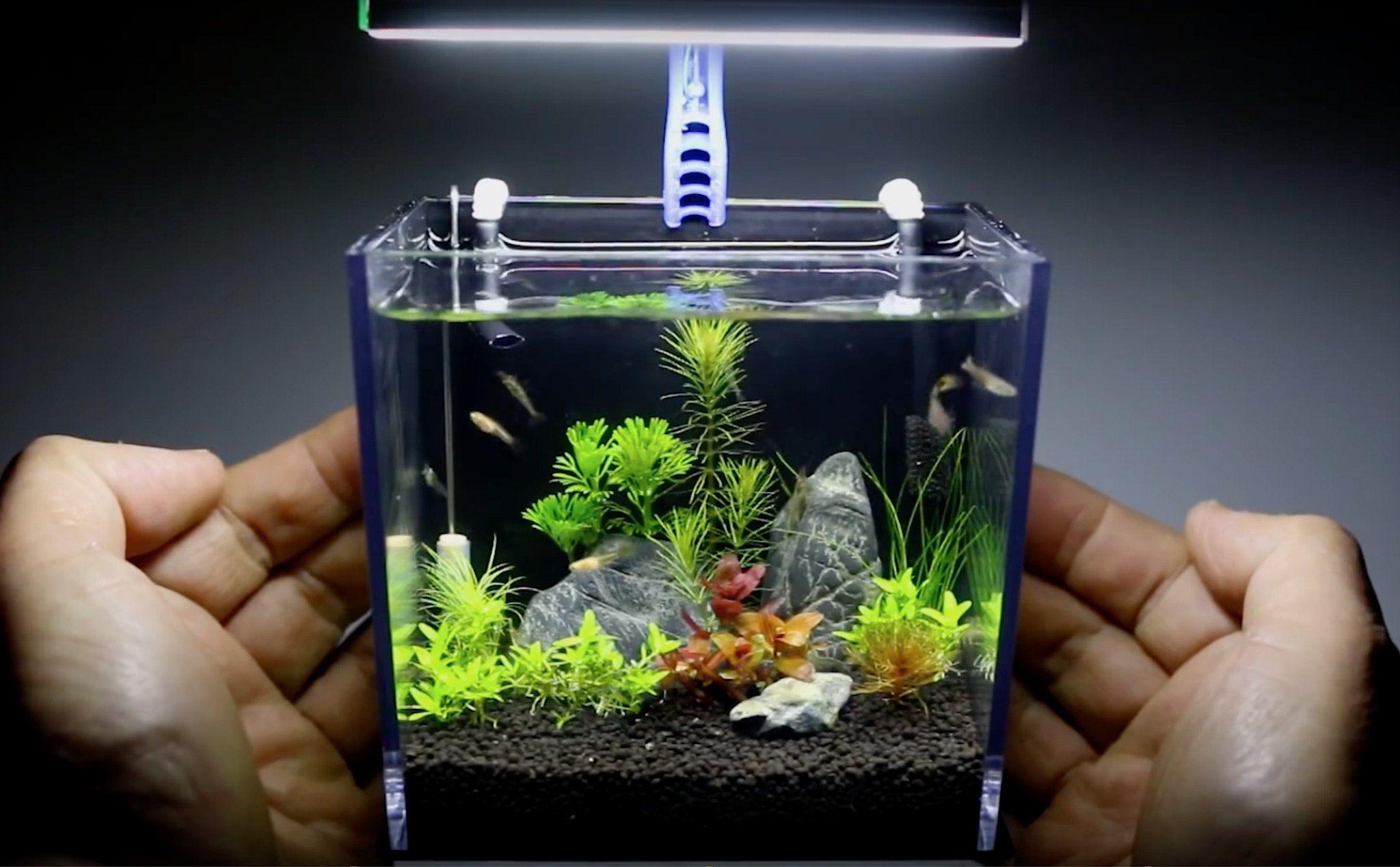 DIY] Làm hồ cá thuỷ sinh mini từ vỏ hộp Gopro bỏ đi | Tinh tế