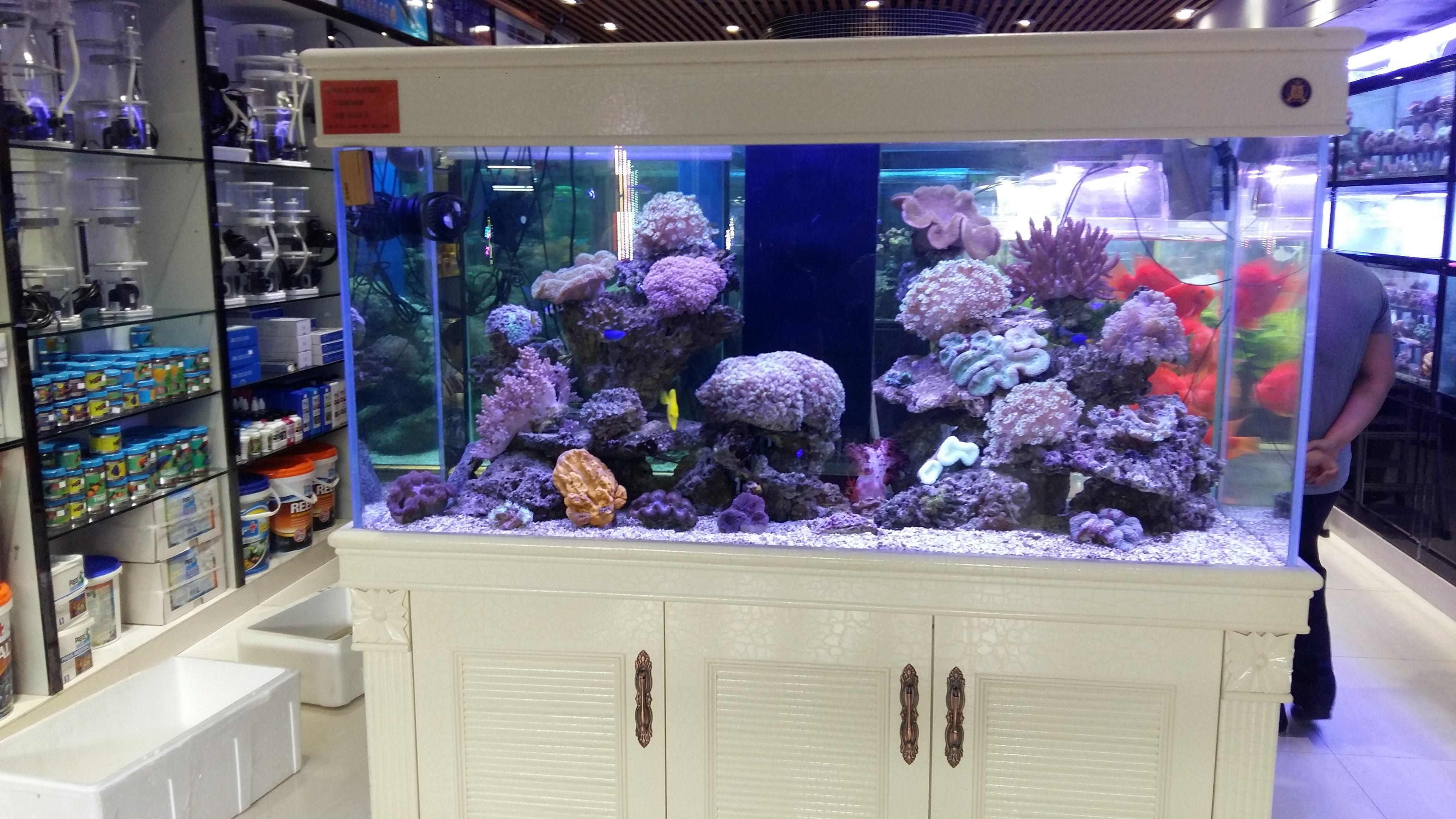 Bể Cá Nhập Khẩu Quận 3 TPHCM - Cá cảnh Sài Gòn - Bán Cá cảnh giá rẻ tại Tân  Bình TPHCM