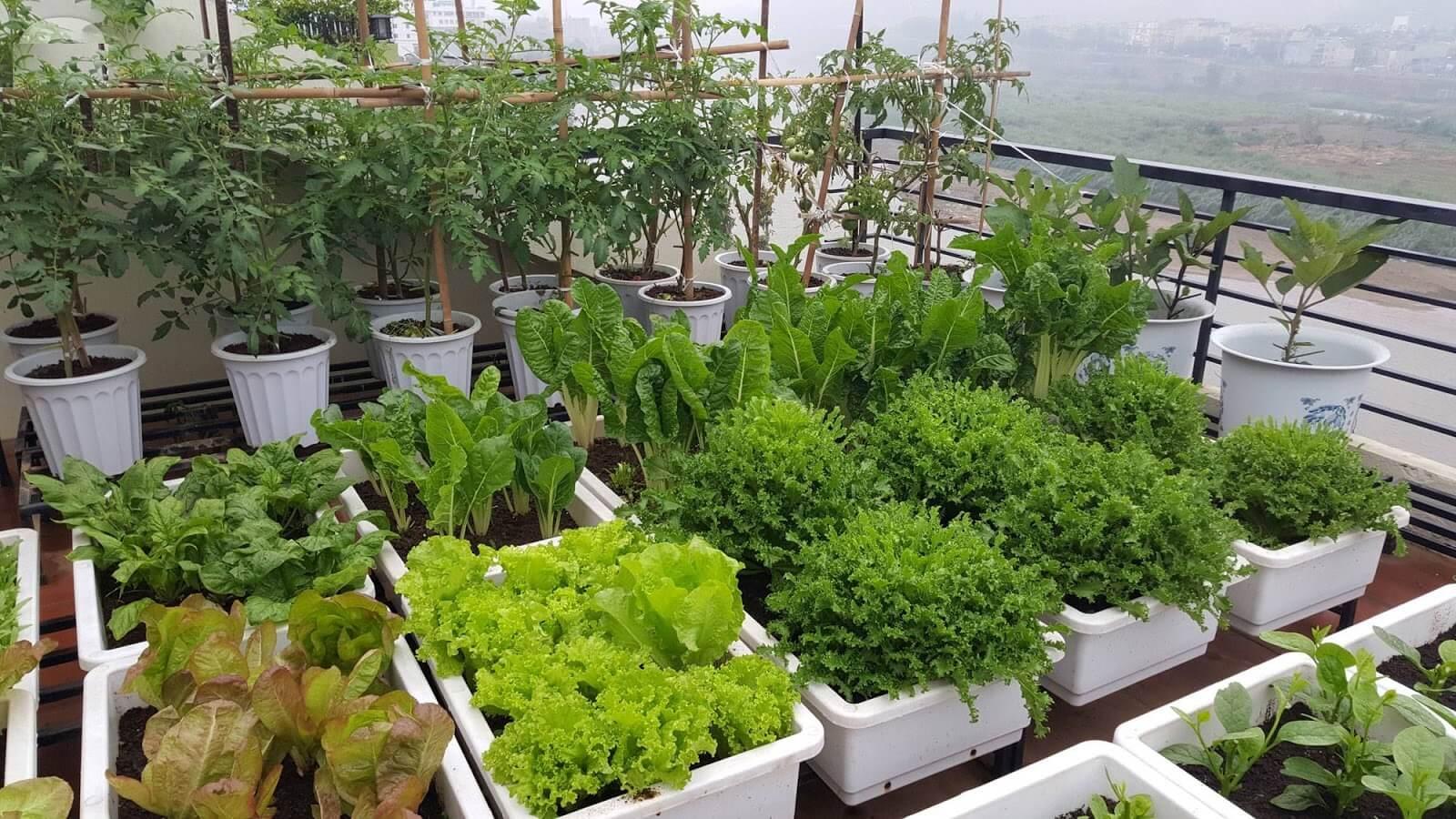 Các mô hình trồng rau tại nhà thông minh mà bạn nên biết