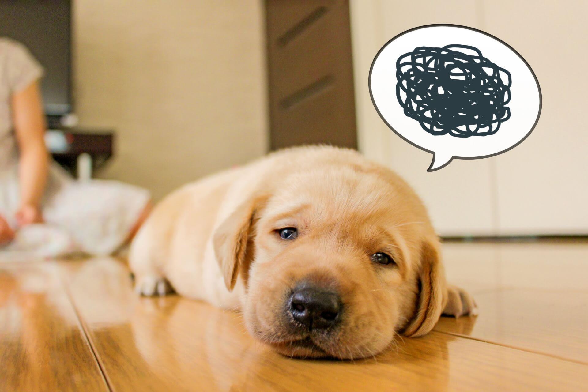 Một số lưu ý khi nuôi thú cưng tại Nhật Bản|Kênh du lịch LocoBee