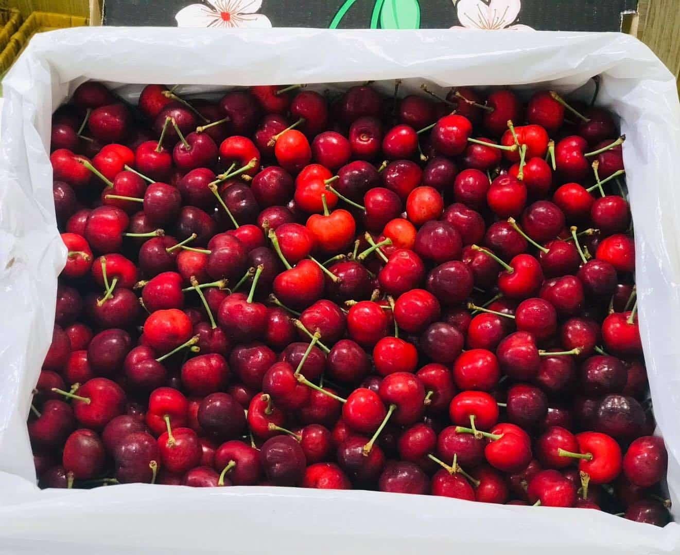 Mua cherry ở đâu TPHCM? Tốt nhất