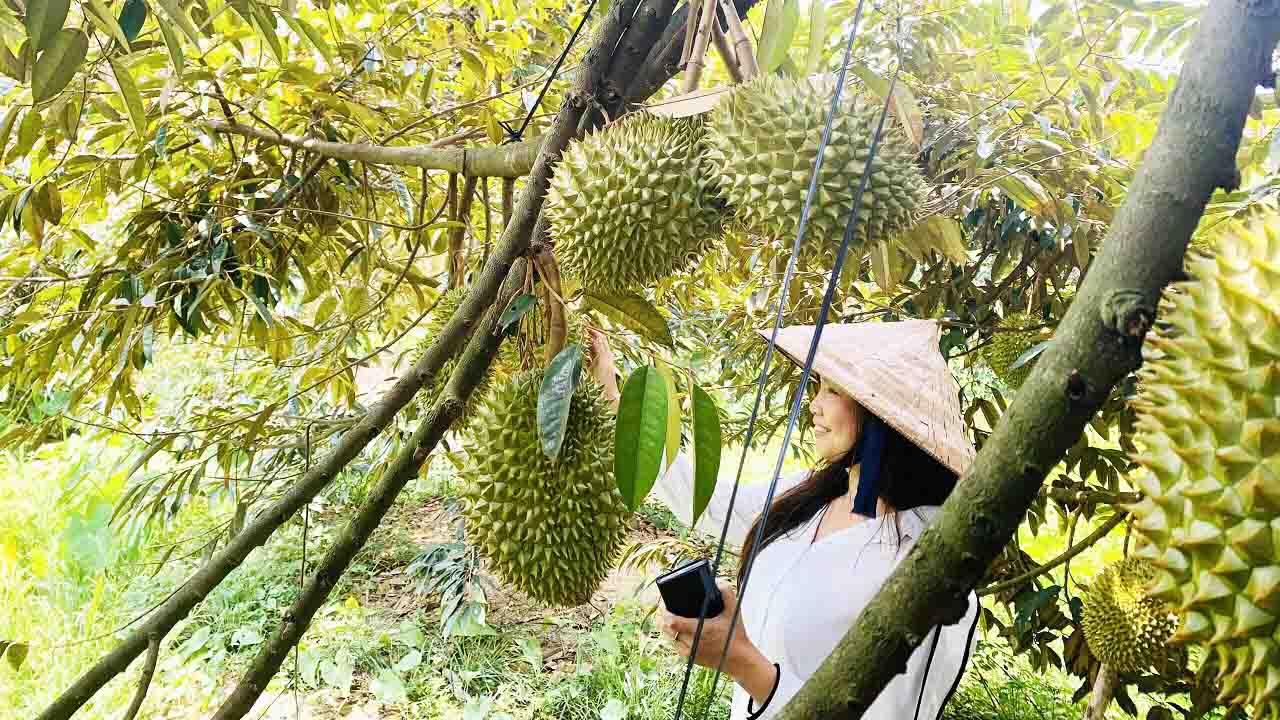 Vườn trái cây Bến Tre - Ghé thăm 7 vườn trái cây hot nhất năm 2021
