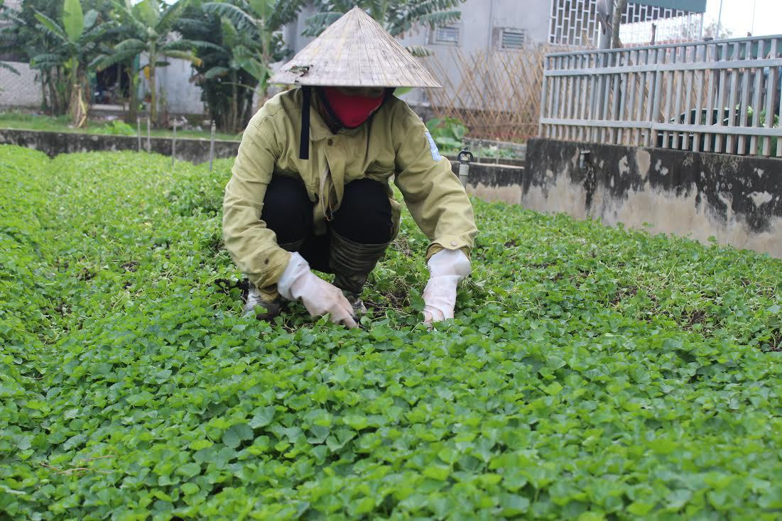 Đất sạch trồng rau TPHCMtốt nhất