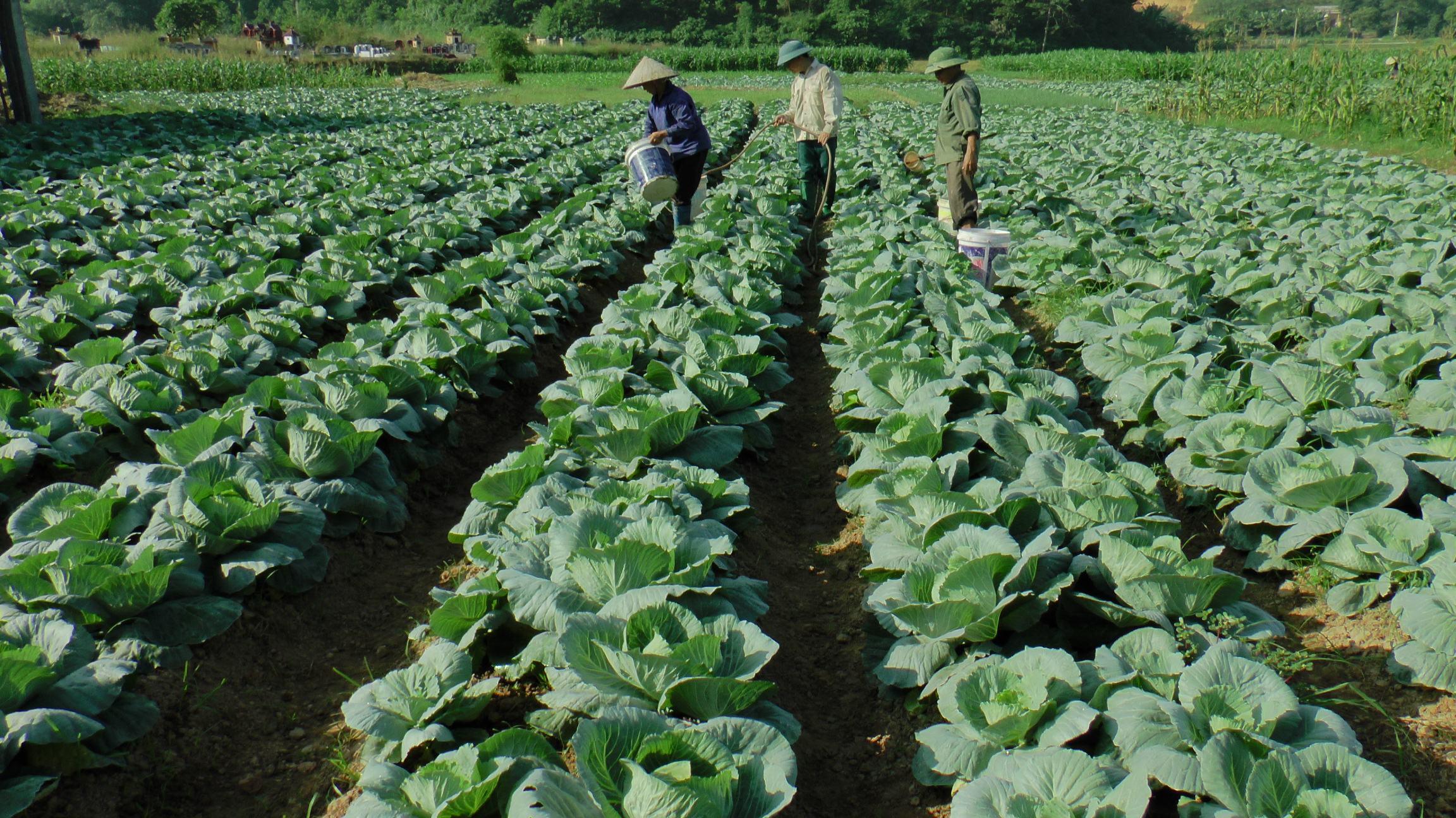 5 loại rau trồng trong mùa thu đông cho năng suất cao, không tốn công chăm  sóc | Kênh Thời Tiết