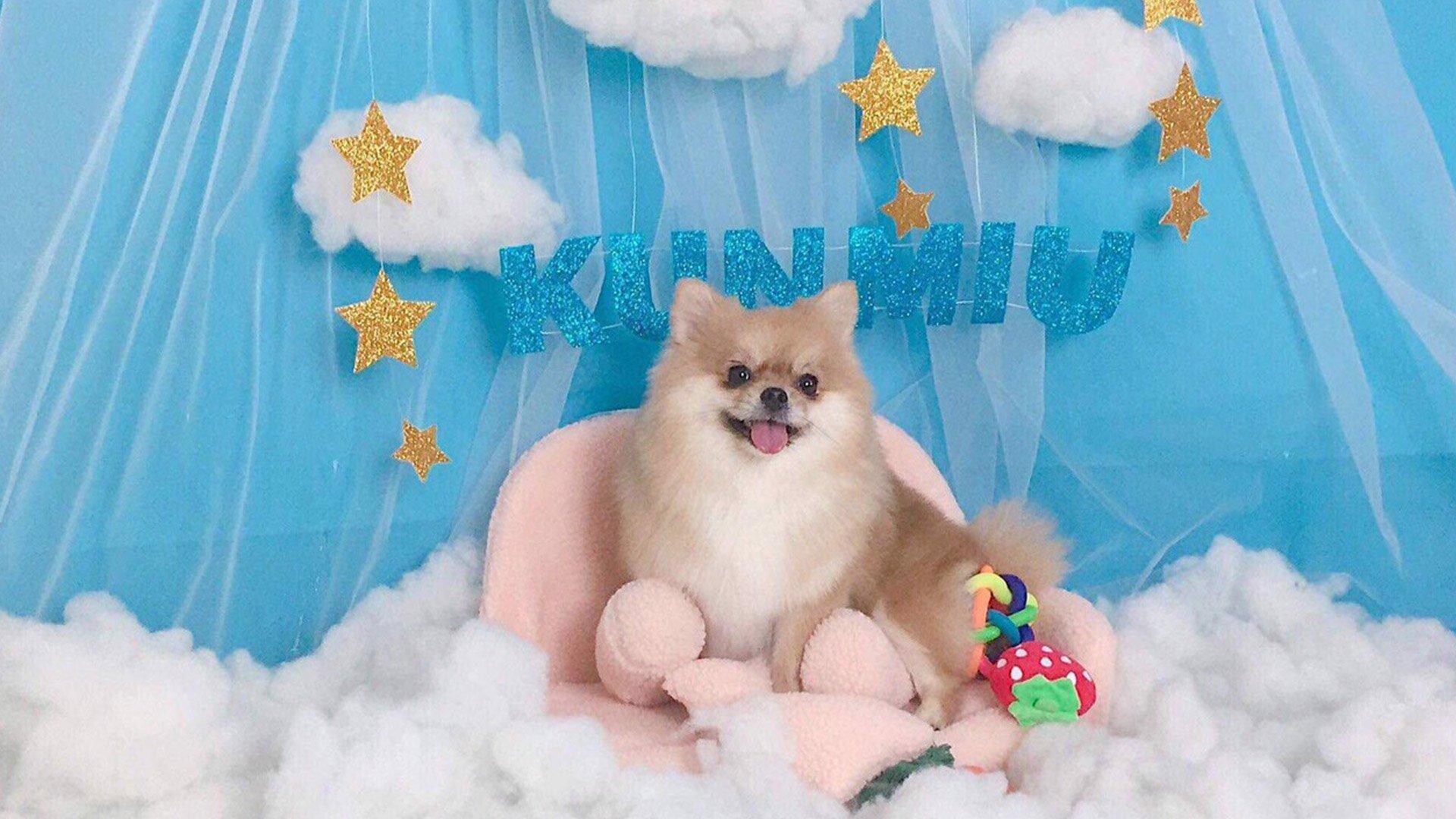 Kún Miu Pet Shop giảm 30% dịch vụ spa thú cưng với VinID Voucher