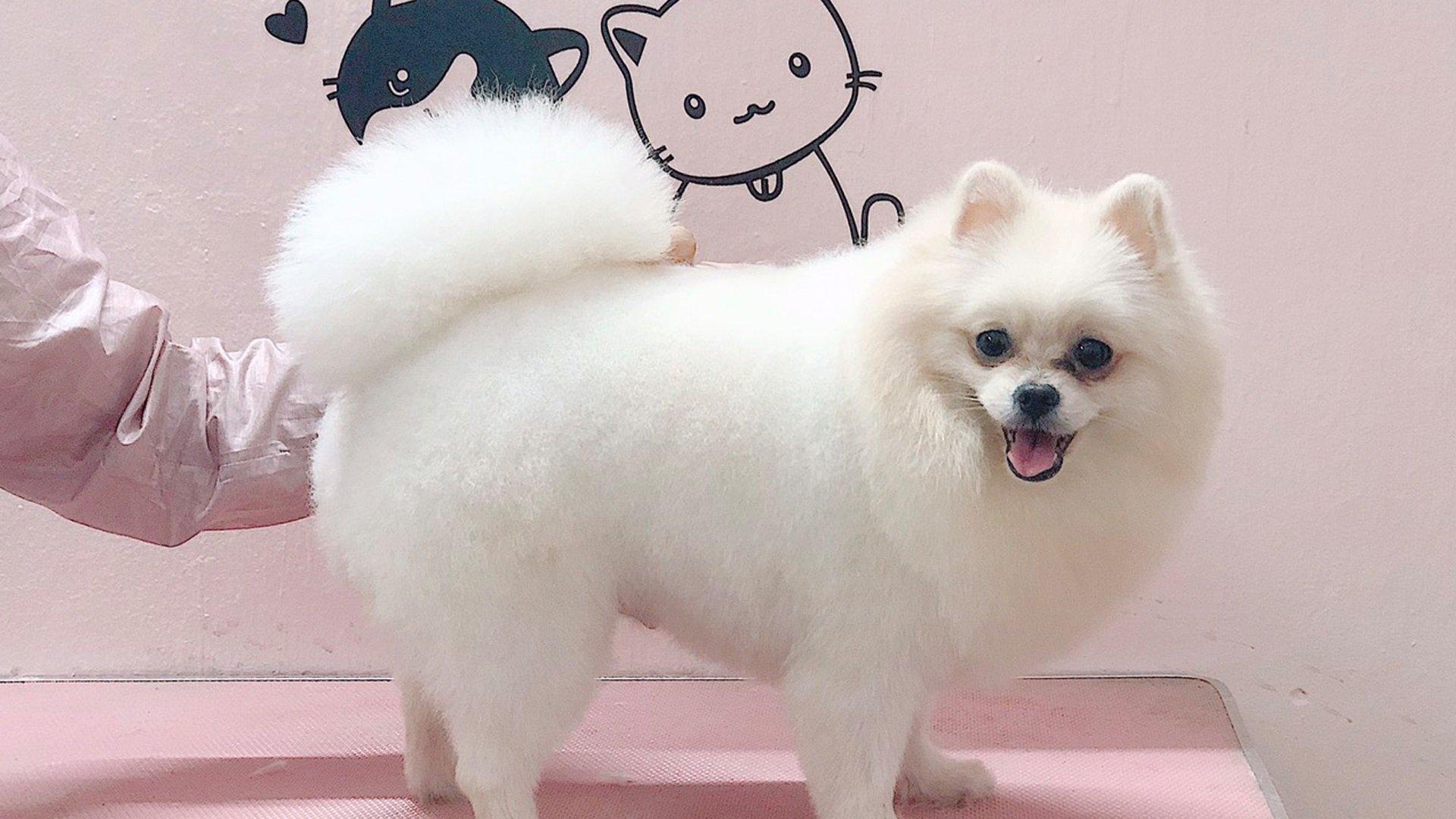 Kún Miu Pet Shop tặng mã giảm giá 30% dịch vụ spa thú cưng trên