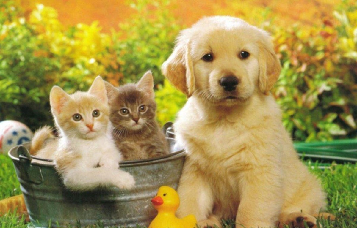 Ngắm nhìn thú cưng giúp người lớn tuổi cải thiện sức khỏe | Sức khỏe | Vietnam+ (VietnamPlus)