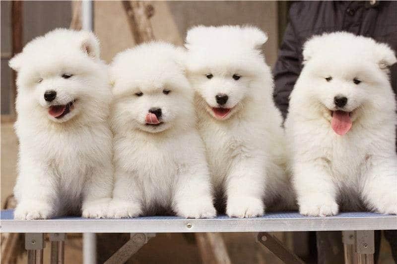 Top 8 địa chỉ bán thú cưng uy tín nhất Tp.HCM - Toplist.vn