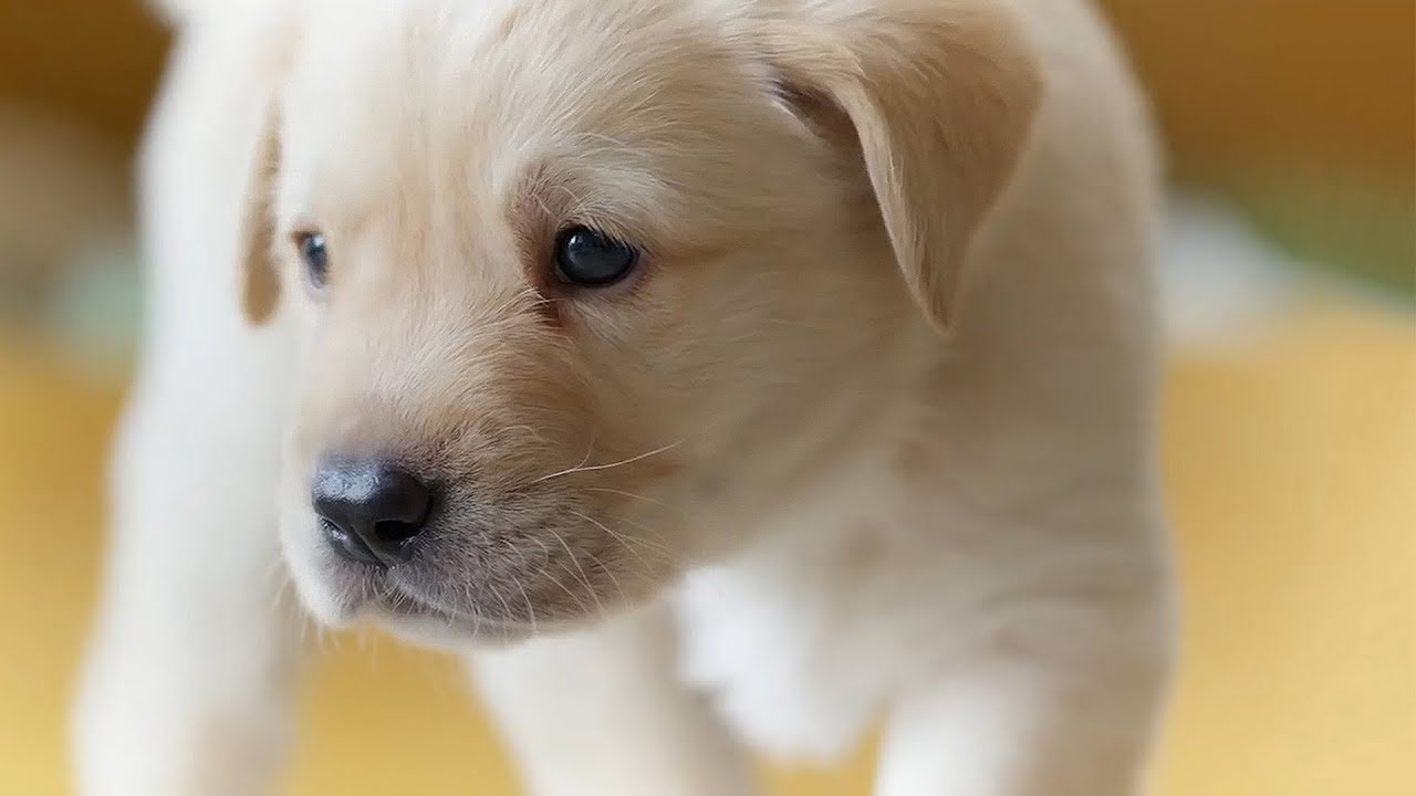 The Best Dogs of BBC Earth | Top 5 | BBC Earth - YouTube