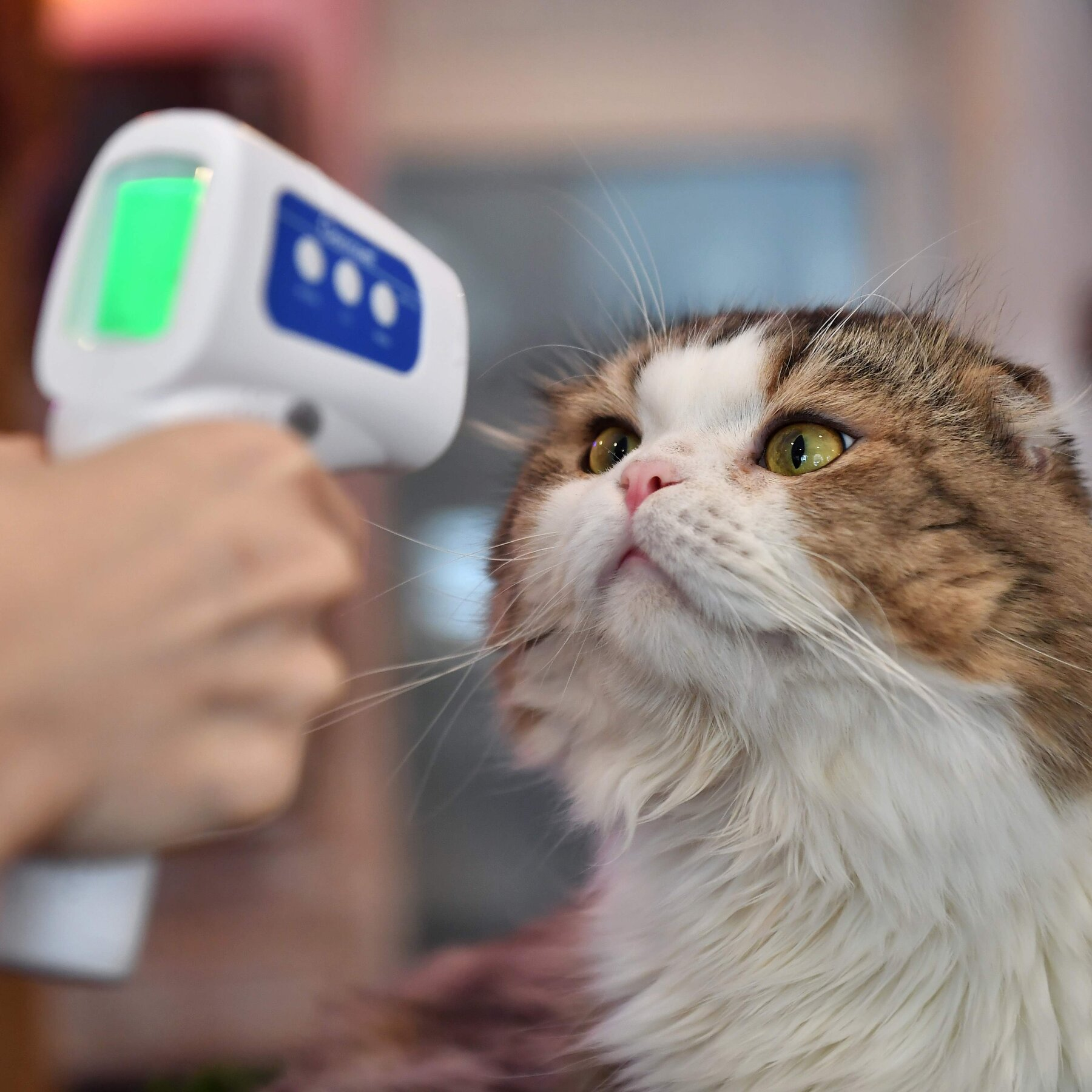 Cats Are Better Than Dogs (at Catching the Coronavirus) - The New York Times