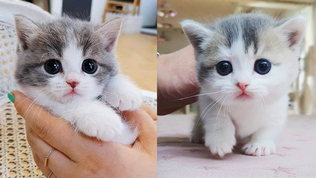 Thống kê video YouTube cho Baby Cats - Cute and Funny Cat Videos Compilation #38   Aww Animals - NoxInfluencer