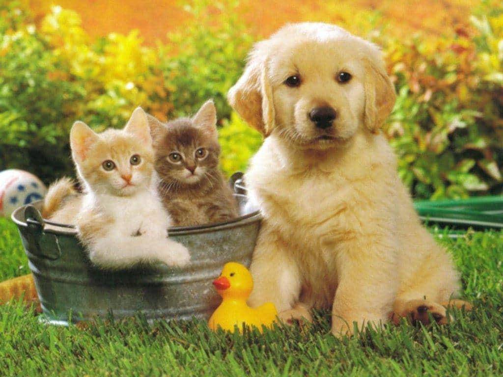 Luật Chăn nuôi 2018: Người nuôi chó, mèo cần lưu ý gì? | Việt Nam Mới