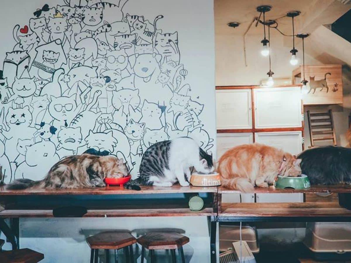 Hà Nội) Những quán cà phê thú cưng làm đốn tim giới trẻ