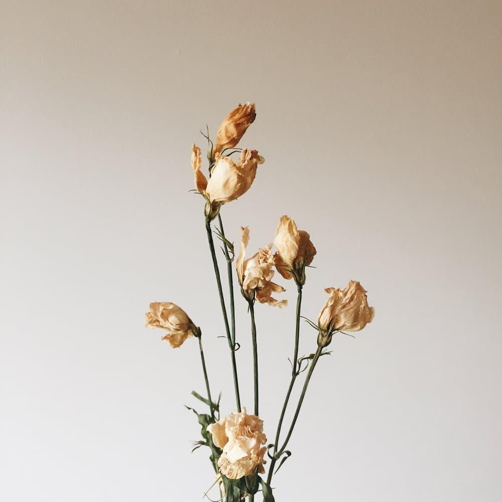 Dried flowers — Charlotte Fosdike