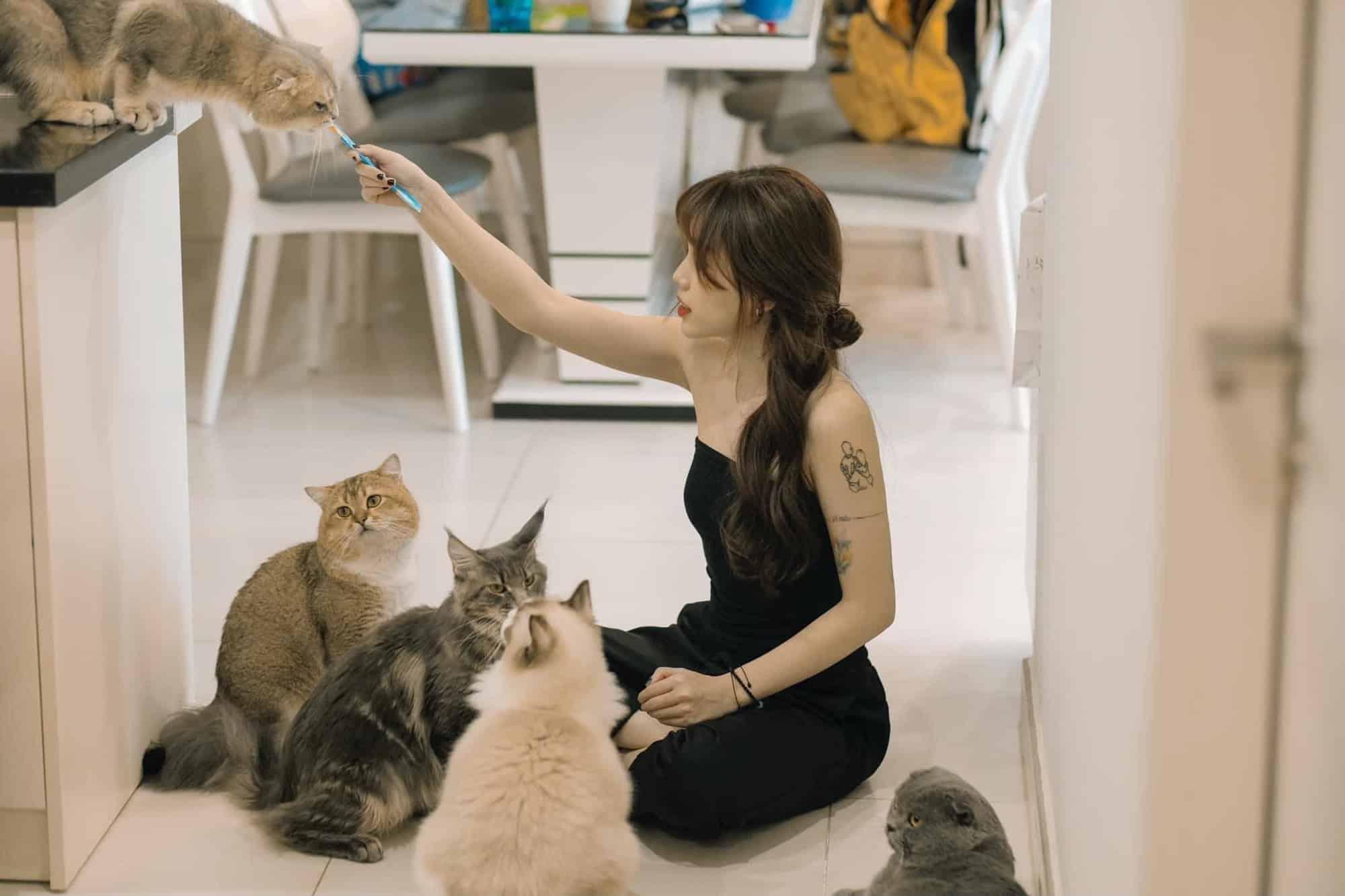 Quán cà phê mèo của linh ngọc đàm - katholic - Mấy Con Mèo