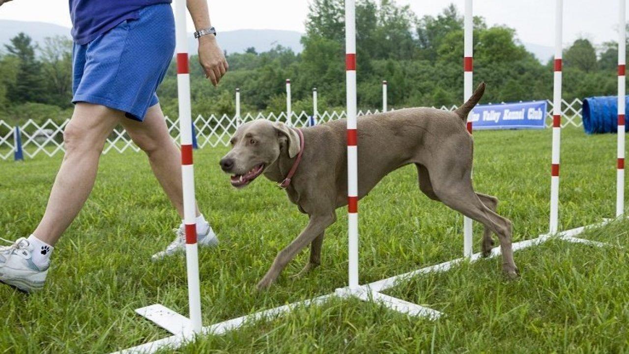 7 Most Popular Dog Training Methods - DogTime