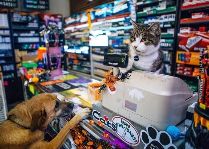 Top 5 Cửa hàng phụ kiện chó mèo giá rẻ nhất Hà Nội và TP Hồ Chí Minh - Top10tphcm
