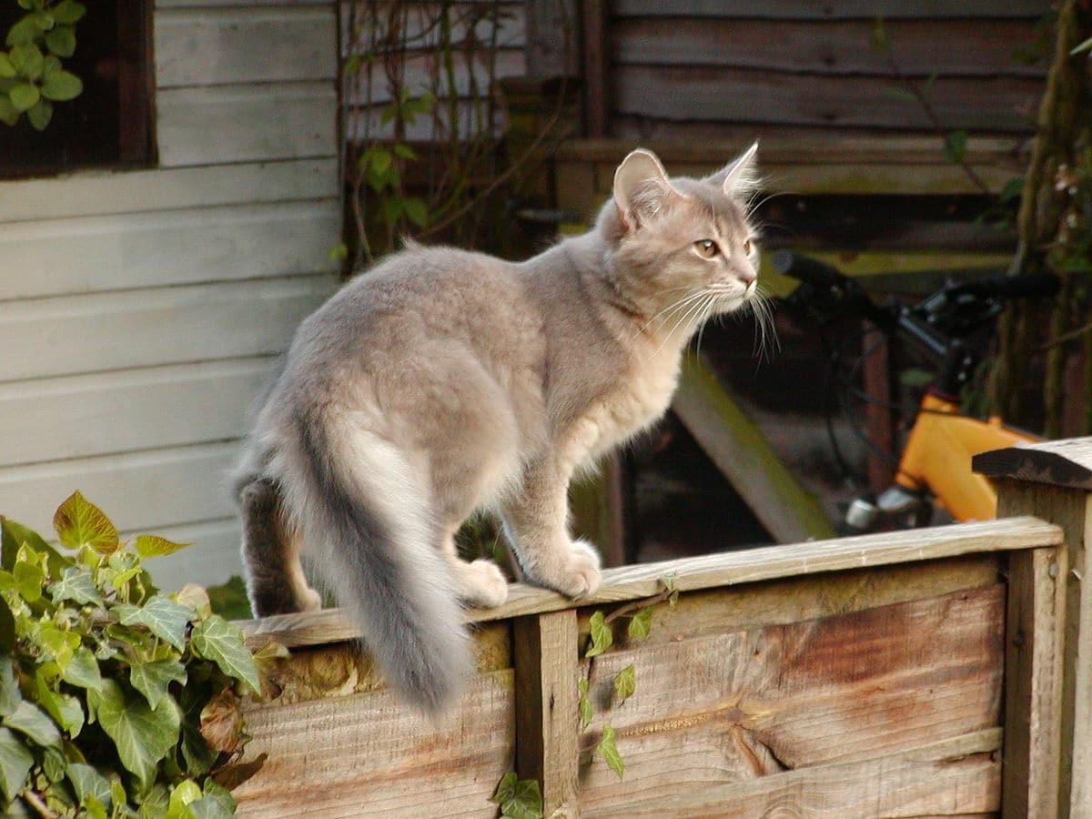 Mèo đẹp nhất thế giới ( 5 )