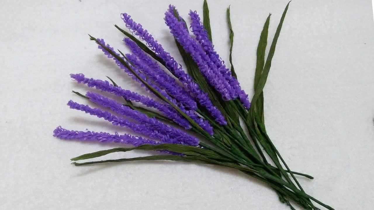 Các loài hoa màu tím ( 1)