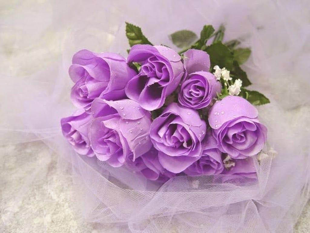 Các loài hoa màu tím ( 4 )
