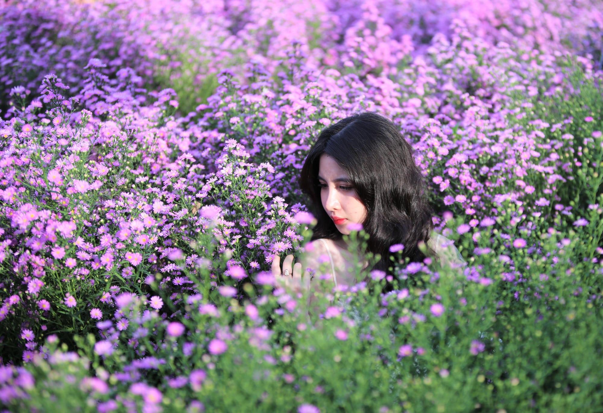 Các loài hoa màu tím ( 8 )